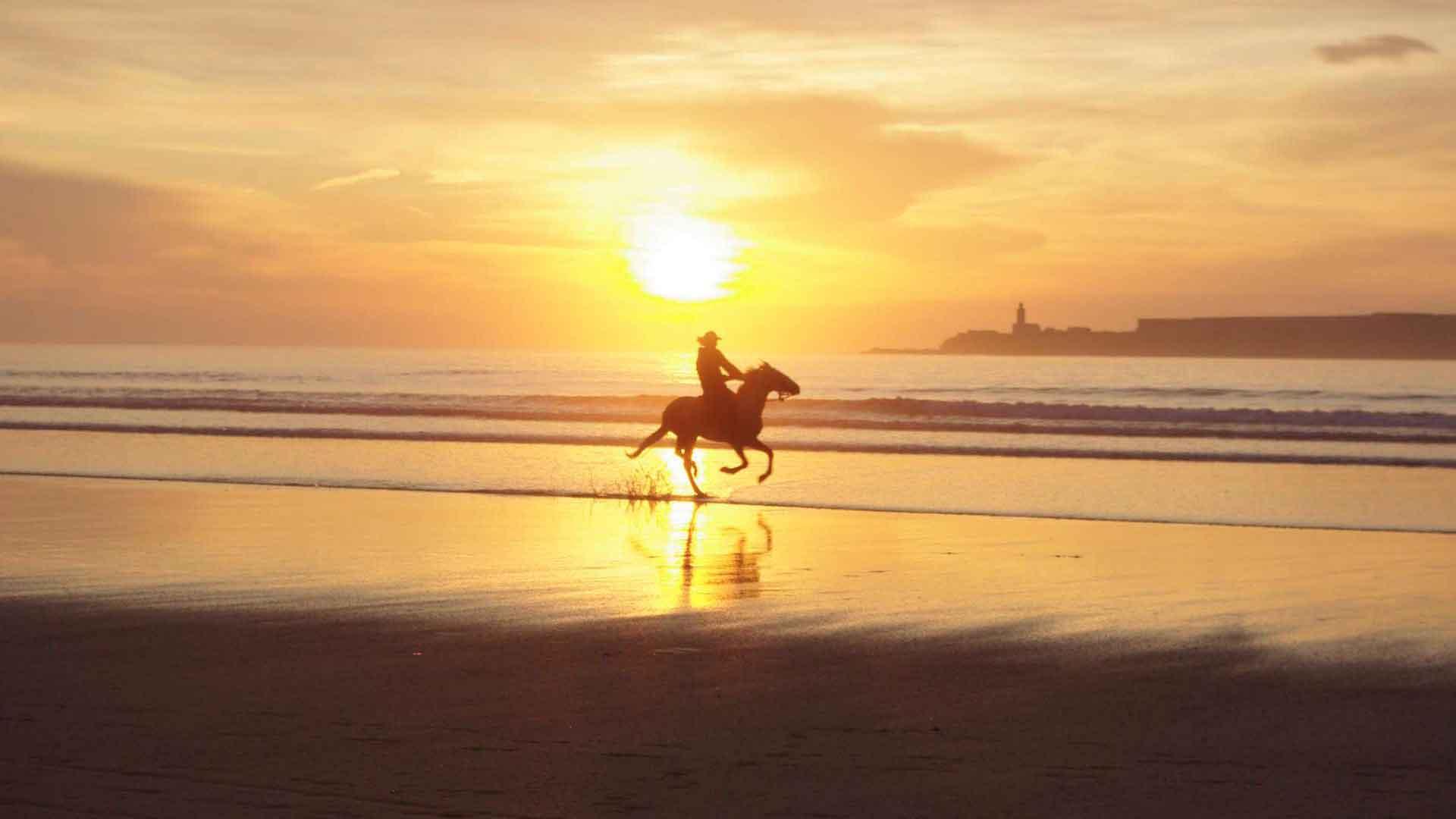 Horse in Essaouira